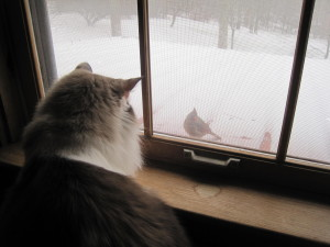 cat bird watching