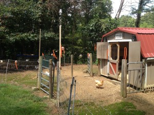 decorated  chicken run